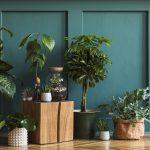 De Herfstaster is een plant die je overal kunt neerzetten